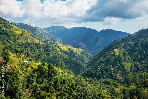 Fototapeta Blue mountains of Jamaica where coffee is grown