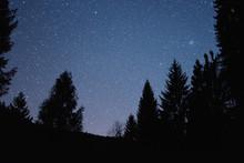 Midnight In Slovenian Forest