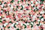 Tupot kwiatowy tło - 187556561
