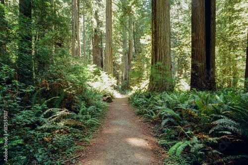 Foto op Canvas Weg in bos Forest Pathway