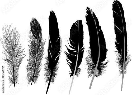grupa sześciu czarnych piór na białym tle