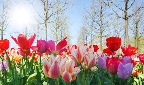 Staande foto Tulp Glück, Lebensfreude, Frühlingserwachen, Leben: Buntes, duftendes Blumenfeld im Frühling :)