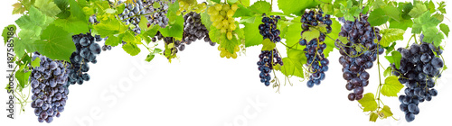 Valokuva  banderole de grappes de raisins, fond blanc