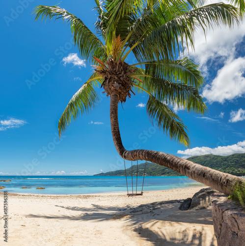 Foto auf Gartenposter Strand Palm tree on tropical beach in Seychelles, Mahe island.