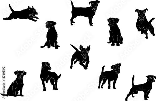Fotografie, Obraz  Jack Russell Terrier, dog, vector, black, silhouette, figure