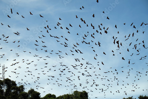 Photo bats flying over the sky