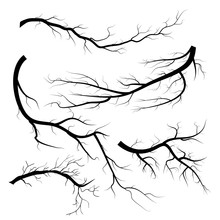 Set Of Dry Twigs, On White Background. Trees Branch Silhouette, Isolated.