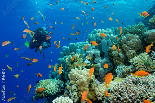 Taucherin am bunten Korallenriff