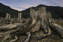 Tree Stumps Against Mountains