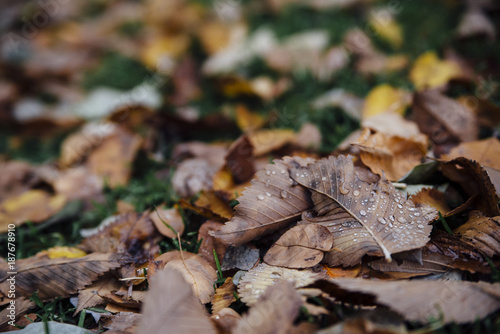 High angle view of wet autumn leaves fallen on field at park