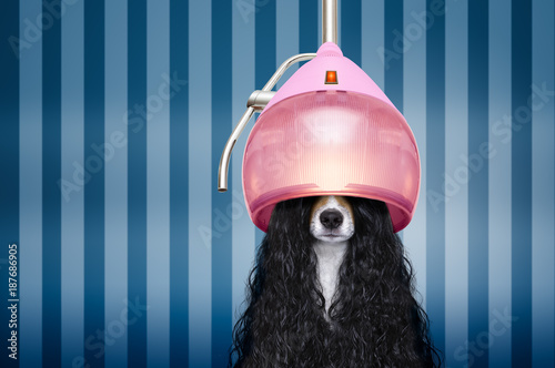 Aluminium Prints Crazy dog dog at hairdressers salon