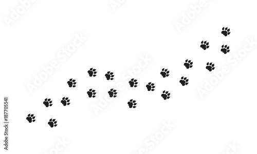 Tiger Walking Foot print designs, Lion Foot print Pattern Fototapete