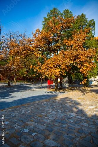 Keuken foto achterwand Begraafplaats Beautiful autumn park. Landscape and fall.