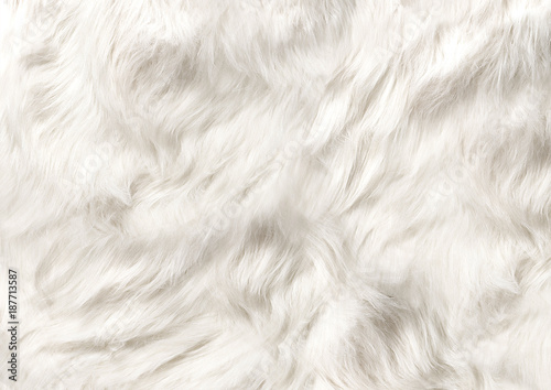 Photo sur Toile Les Textures dog fur soft