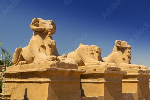 Spoed Fotobehang Egypte Ancient statues of Ram-headed sphinxes in Karnak temple, Luxor