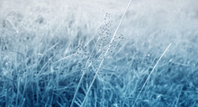 Gray  Grass Flower And Grass  Fields Winter, Spring ,autumn Nature  Photo Background