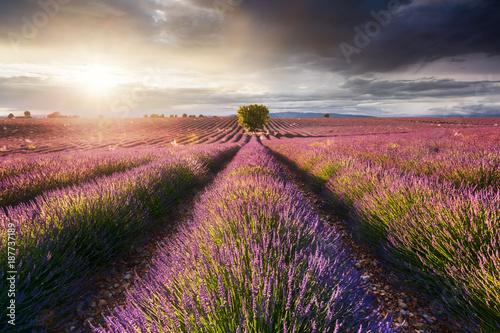 Tuinposter Lavendel Champ de Lavande, Provence, France