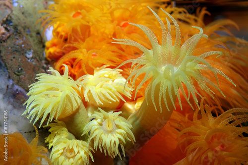 Photo Anemone close up