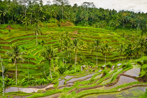 Tuinposter Rijstvelden The Tegallalang subak rice terrace system in Ubud, Bali, Indonesia.