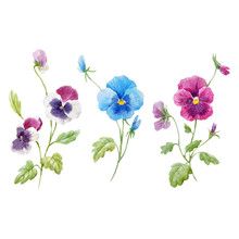 Watercolor Pansy Flower Vector Set