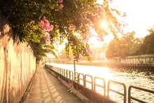 Pink Flower On Walkway And The River At Sunset