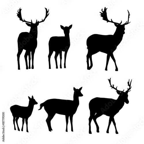 Fototapeta Set of vector silhouettes of deer with a fawn obraz