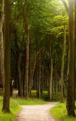 FototapetaWanderweg in einem Laubwald