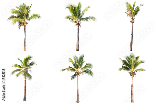 six coconut tree isolated on white background