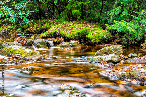 Aluminium Prints Forest river Red creek in Dolly Sods, West Virginia during autumn, fall with green pine tree forest and smooth water river, waterfall ripples fallen leaves on rocks, stones
