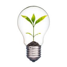 Small Plant In A Light Bulb, E...