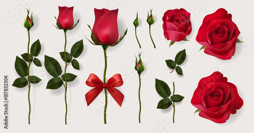 Photo  Valentine's day greeting card templates with realistic of beautiful red rose on background color
