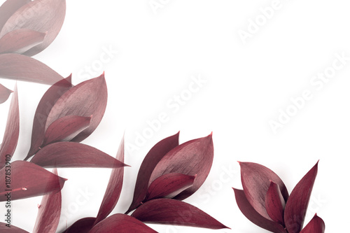 Poster Fleur burgundy leaves on twigs isolated on white