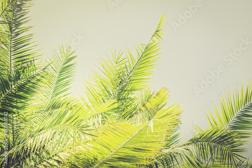 Yellow Toned sunlight Palm leaves background with copy space Holy Week Easter concept Long weekend spring break