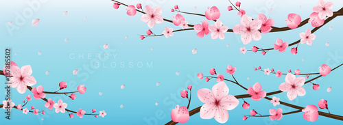 Canvas cherry blossom realistic vector, sakura,japan