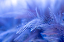 The Background Of Blue Feather...