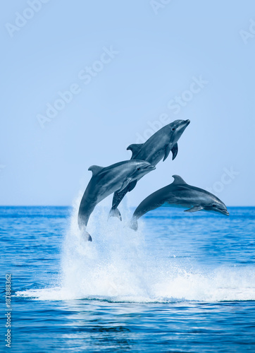 Plakaty do łazienki  group-of-jumping-dolphins-beautiful-seascape-and-blue-sky
