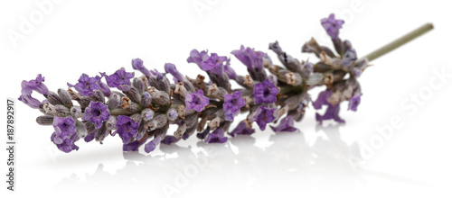 Photo  Lavender