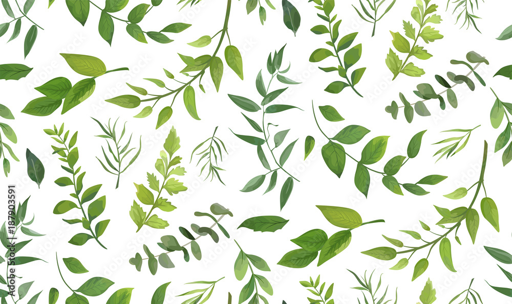 Fototapety, obrazy: Seamless pattern of Eucalyptus palm fern different tree, foliage natural branches, green leaves, herbs, tropical plant hand drawn watercolor Vector fresh beauty rustic eco friendly background on white
