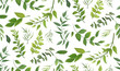 Seamless pattern of Eucalyptus palm fern different tree, foliage natural branches, green leaves, herbs, tropical plant hand drawn watercolor Vector fresh beauty rustic eco friendly background on white