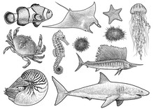 Marine Animals Collection Illu...