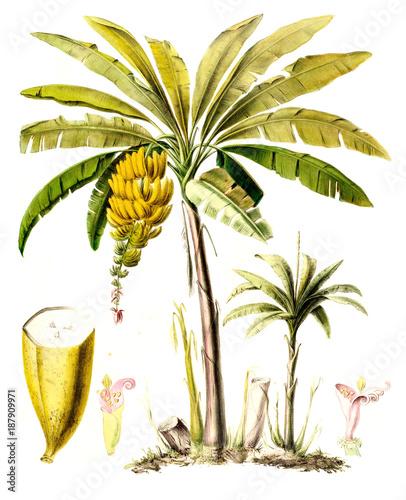 motyw-botaniczny