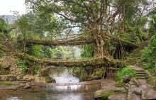 Living Roots Bridge Near Nongr...