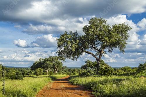 Staande foto Afrika Savannah landscape in Kruger National park, South Africa