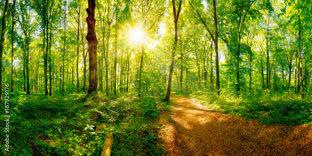 Fototapety, obrazy: Path through a spring forest in bright sunshine