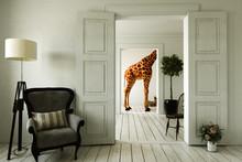 Giraffenwohnung Mit Mehreren Zimmern