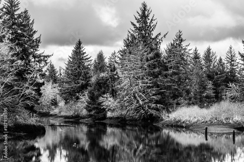 Slack Tide, Jessie Slough, Grays Harbor County, Washington, Winter 2017 Wallpaper Mural