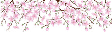 Spring Banner. The Pink Sakura Blossoms. Branches Of A Blossoming Cherry On A White Isolated Background.