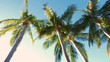 Driving through palm trees on sunny day. Low angle view. Slow motion