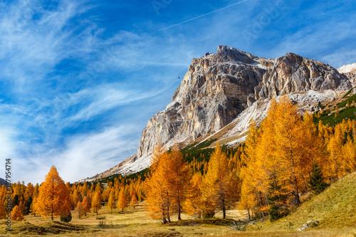 Fotografie, Obraz  jesienne, kolorowe drzewa na łące pod Monte Lagazuoi