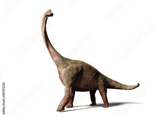 Fototapeta Brachiosaurus altithorax from the Late Jurassic (3d illustration isolated on whi